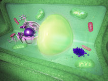 Plant cell cutaway. Science illustration Royalty Free Stock Photography