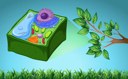 Plant cell and green leaf Stock Photos