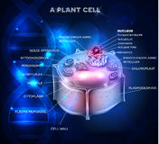 Plant Cell structure and DNA chain. At the background Royalty Free Stock Photo