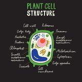 Plant cell structure. Hand drawn infographic poster. Vector. vector illustration