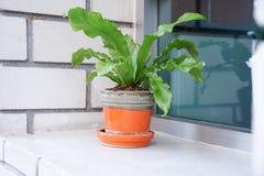 Plant in ceramic pot near window, in soft focus Stock Images