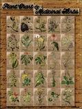 Plant Chart of Medicinal Herbs 1 Stock Photography