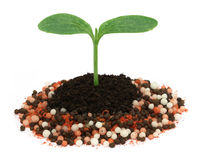 Plant in chemical fertilizer Stock Photos