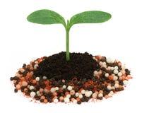 Plant in chemical fertilizer Stock Photos