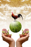Plant and chicken in the hand Stock Images