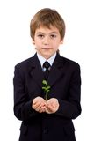 Plant in children's palms Stock Image