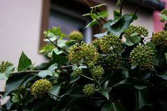 The plant in city Royalty Free Stock Photography