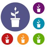 Plant in clay pot icons set Stock Image