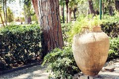 Plant in clay pot in Parco Colonna, famous public park in Taormina, Sicily, Italy royalty free stock photography