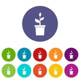 Plant in clay pot set icons Royalty Free Stock Image