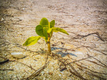 Plant. Climate diversity drought dune green heat leaves life roots sand survival Plant royalty free stock photography