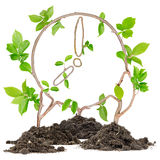 Plant Clock Stock Images