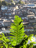 Dryopteris (commonly called wood fern, male fern, or buckler fern). Close up of a plant with in the background the city of Bergen, Norway Royalty Free Stock Photos
