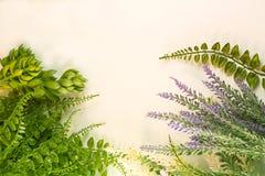 Plant Cluster Succulent Garden Fresh Nature Green Border