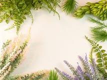 Plant Cluster Succulent Garden Green Border