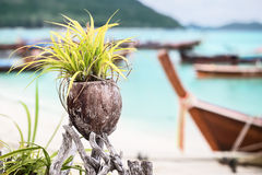 Plant in coconut pot on Asian beach. Decoration. Stock Images