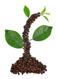 Plant from coffee grains Royalty Free Stock Images