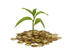 Plant and coin Royalty Free Stock Images