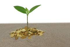 Plant and coin Royalty Free Stock Photo