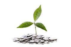 Plant on coins Royalty Free Stock Images