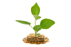 Plant and Coins Royalty Free Stock Photo