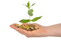 Plant and Coins. Hand with young plant and coins isolated on white background Stock Photo