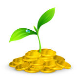 Plant and coins Stock Photos