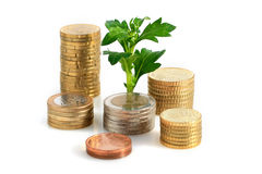 Plant and coins. Royalty Free Stock Photo