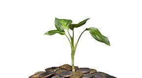 Plant and coins royalty free stock photography