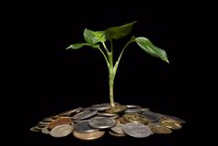 Plant  and  coins Stock Image