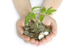 Plant in coins Royalty Free Stock Photo