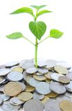 Plant in coins stock images