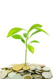 Plant in coins Stock Image