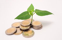 Plant coins Stock Image