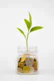 Plant and coins in glass jar Stock Photo