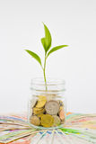Plant and coins in glass jar Stock Photos