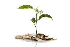 Plant on coins growing Stock Photo