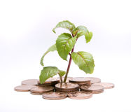 Plant and Coins, Isolated. Stock Photo