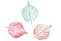 Plant colored leaves hand-drawn with crayons. Natural element on white background stock illustration