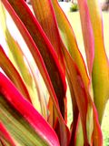 Plant. Colourful of leafs in nature Royalty Free Stock Images