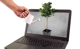 Plant Come out of laptop. Watering plant Come out of laptop , isolated on white background Royalty Free Stock Image