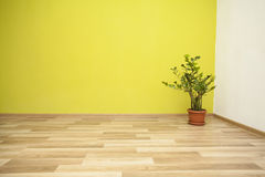 Plant in the corner of a green room Stock Image