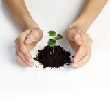 Plant cover stock images