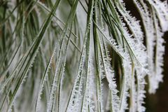 Plant covered in frost Royalty Free Stock Images