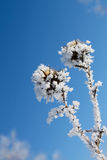 Plant covered with snow. Winter scene plant covered with snow stock photo