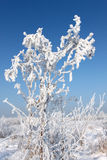 Plant covered with snow Stock Images