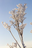 Plant Covered in Snow and Frost Royalty Free Stock Image