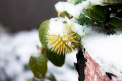 Plant covered with snow Stock Photos