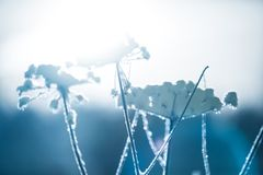 Plant covered in soft snow and ice crystals royalty free stock image