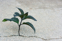 Plant in a crack Stock Image